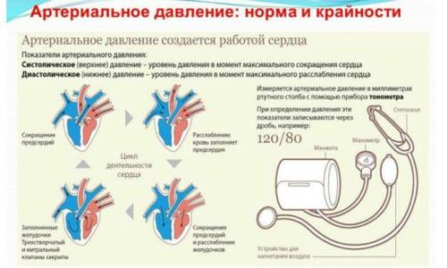 Существует два вида АД – систолическое, связанное с работой сердца, сердечным выбросом, и диастолическое, которое зависит от тонуса сосудов